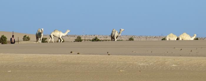 desert18.jpg